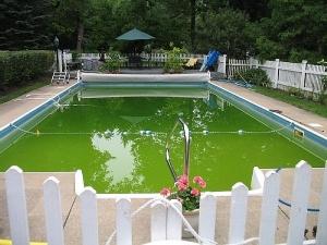 Зеленая вода в бассейне