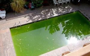 Вода в бассейне позеленела