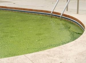 Зеленые водоросли в бассейне